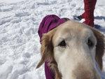 愛犬スノーシュー